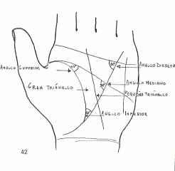 immagine che ritrae i piccoli angoli sul palmo della mano